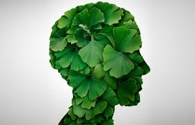ginko-biloba-and-tinnitus-symptom-relief-nyc-therapist-skype-02